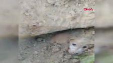 Esenyurt'ta toprağa gömülen köpekleri çocuklar kurtardı