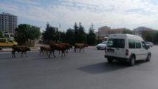 Kayseri'de başıboş hayvan sürüsü, trafiği karıştırdı