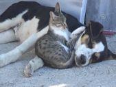 Amasya'da kedi ile köpeğin dostluğu