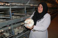 Kahramanmaraş'ta 10 bin tavuk telef oldu