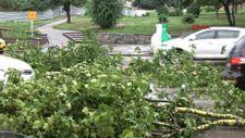 Edirne'de fırtına ağaçları devirdi