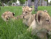 Kayseri hayvanat bahçesinde yeni doğumların sevinci yaşanıyor