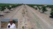 Adana'da narenciye bahçesindeki 108 ağacı baltayla kestiler