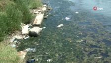 Büyükçekmece Gölü'nde ölü balıklar kıyıya vurdu
