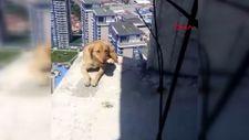 Esenyurt'ta 36'ncı katta 10 gündür mahsur kalan köpeği itfaiye kurtardı