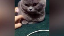 Sahibinin elini tutan kedi