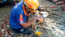 Afyonkarahisar'da ağılın çatısı çöktü, 15 hayvan telef oldu