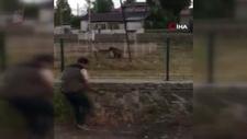Sarıkamış'ta keçilere saldıran ayı