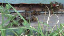 Van'da kuraklıktan arıcıları etkiledi