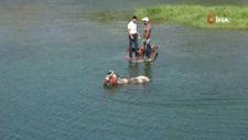 Adana'da sıcaktan bunalan atı nehirde serinlettiler