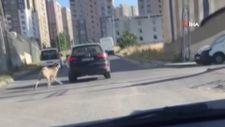 Esenyurt'ta seyir halindeyken köpeği peşinden koşturan sürücü