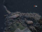 Küçükçekmece Gölü'nde yüzlerce balık ve yengeç öldü