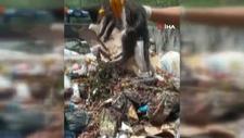 Manisa'da temizlik işçisi çöpe atılmış yavru kedi buldu