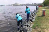 Küçükçekmece Gölü'nde kıyıya vuran ölü balıklar toplandı
