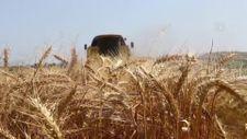 Tekirdağ'da buğdayda yüksek rekolte bekleniyor