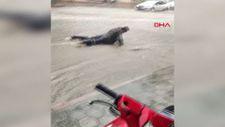 Adana'da 15 dakikalık sağanak: Su birikintisine atladı