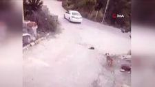 Konya'da sürücünün göz göre göre köpeğin üzerinden geçtiği anlar