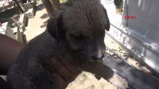 Silivri'de iki mezar arasına sıkışan yavru köpekleri itfaiye kurtardı