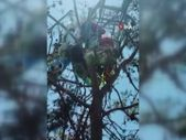 Muğla'da ağaçta asılı kalan yamaç paraşütçülerini itfaiye kurtardı