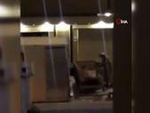 Suudi Arabistan'da evin çatısında aslan dolaştı
