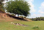 Adana'da mesire alanları piknikçilerin çöpleri ile doldu