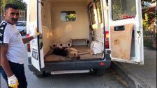 Afyonkarahisar'da sokak köpeği çocuğa saldırdı
