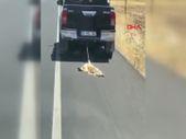 Şırnak'ta kamyonete iple bağlanıp, sürüklenen köpek