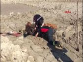 Tokat'ta bataklığa saplanan ineği itfaiye kurtardı