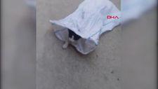 İstanbul'da kediyi çuvala koyup evin bahçesine attılar