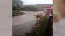 Ardahan'da şiddetli yağışlar sele neden oldu
