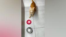 Kediler evde tekken neler yapar
