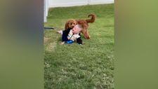 Küçük dostuyla oynayan sevimli köpek