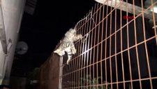 Kocaeli'de karnına tel saplanan yavru kedi kurtarıldı