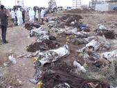 Afrin'deki toplu mezardan çıkan ceset sayıları artıyor