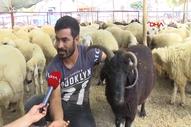 Adana'da 4 boynuzlu koç 10 bin liradan alıcısını bekliyor
