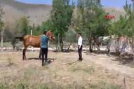 Ankara'da sahipsiz atlarla göl gezisine para cezası