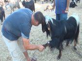 Antalya'da beslediği keçi ile yaptığı pazarlık gülümsetti