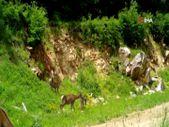 Bursa'da kızıl geyikler fotokapana yakalandı