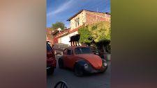 Meksika'da arabanın üzerinde yolculuk eden köpek