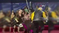 Rusya'da sirkte gösteri yapan ayı terbiyecisine saldırdı