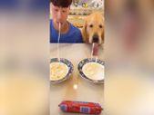 Köpek ile makarna yeme yarışı