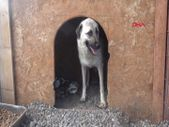 Erzurum'da annesiz kalan yavru köpeklere, süt anne verildi