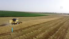 Konya'da kuraklığa dayanıklı arpa verimi üç kat artırdı