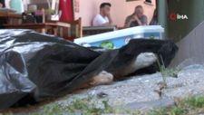 Eskişehir'de kediyi öldürüp mama ve su kabının yanına bıraktılar