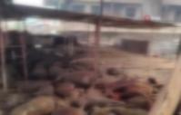 Antalya'da yangında 100'e yakın küçükbaş hayvan telef oldu