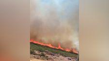 Didim'in İmbat Koyu'nda yangın başladı