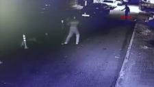 Bağcılar'da pitbull sokak kedisini öldürdü