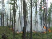 Sibirya'daki orman yangınları 1.3 milyon hektarlık alanı küle çevirdi