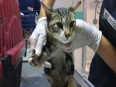 Manavgat'ta gönüllü veterinerler yaralanan hayvanlar için seferber oldu