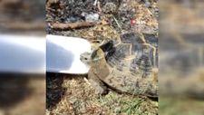 Osmaniye'de yangında iki kaplumbağayı kurtaran işçiler taktir topladı